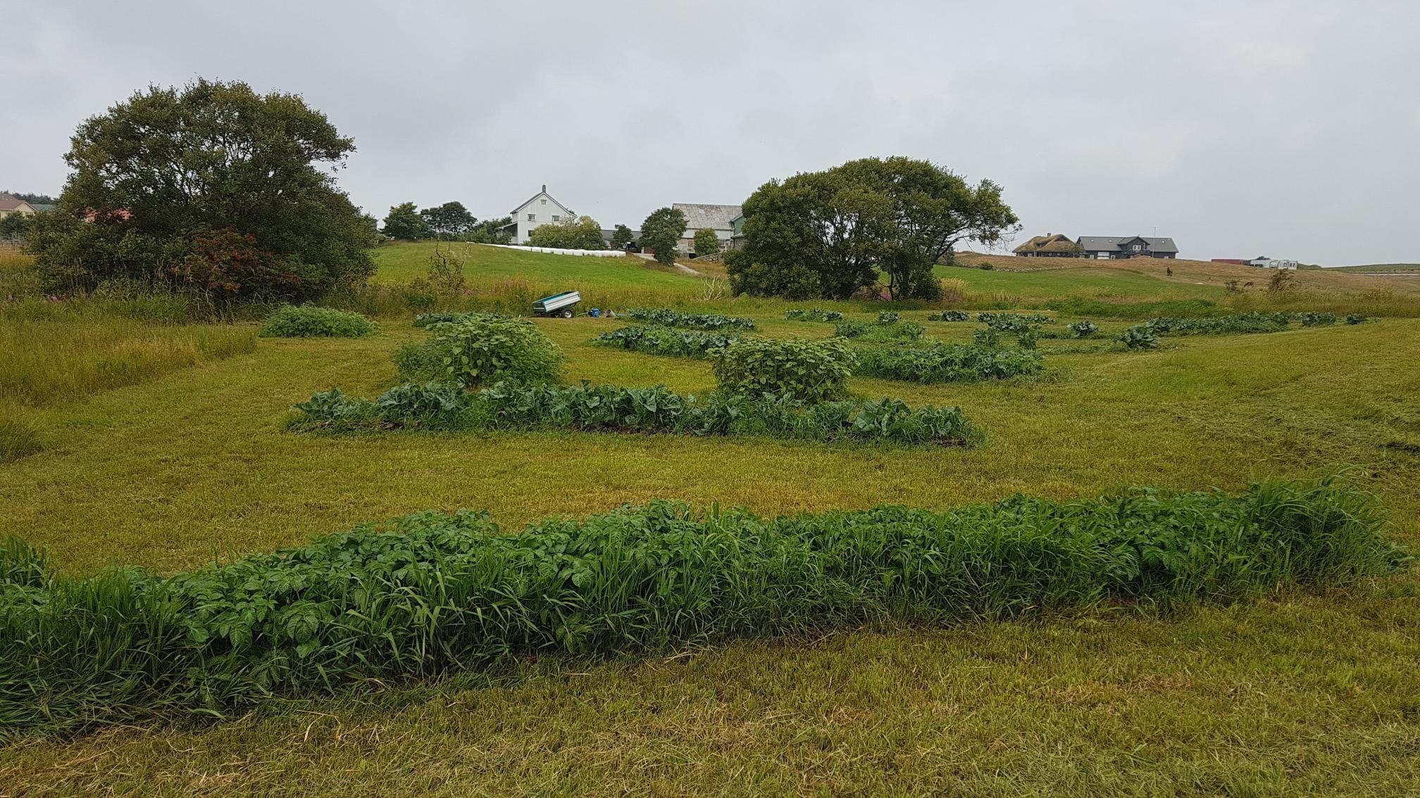 Prøvedyrking etter jordbokmetoden: Knallresultat utan å vatna i tidenes tørkesommar