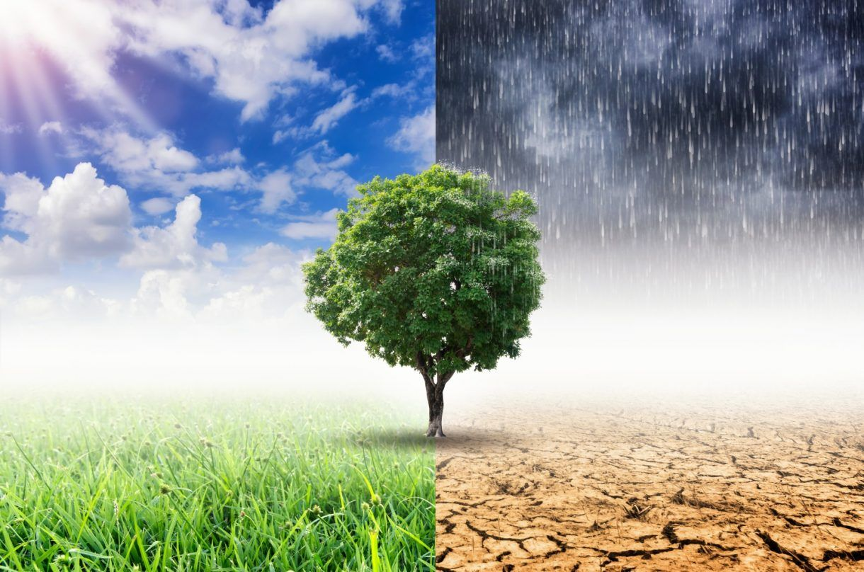 Natur eller Antinatur? Den store verdikampen om framtidslandbruket