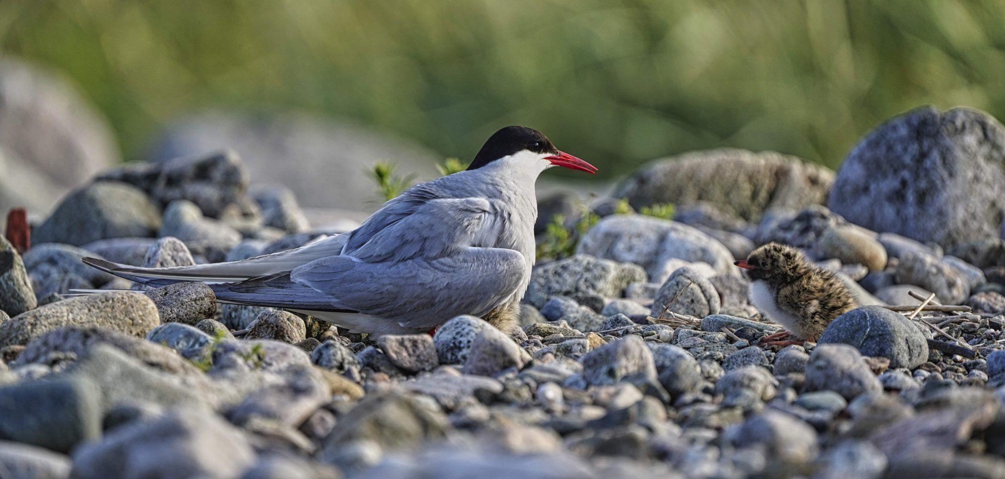 Fuglen og framtida. Ei lita historie om lokalt og globalt