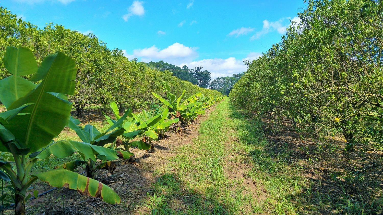 Syntropi i åker og hage: den naturnære vegen til den grøne framtida